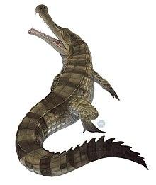 756172d2caab9 Sarcosuchus - Wikipedia