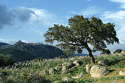 Sardinia Orune and tree.jpg