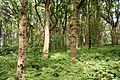 Schleswig-Holstein, Windbergen, Landschaftsschutzgebiet Wodansberg NIK 6716.JPG