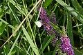 Schmetterling und Biene sammeln Nektar.jpg