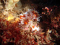 Sea anemones in tide pools.jpg