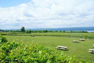 Weinberge in Seneca Lake