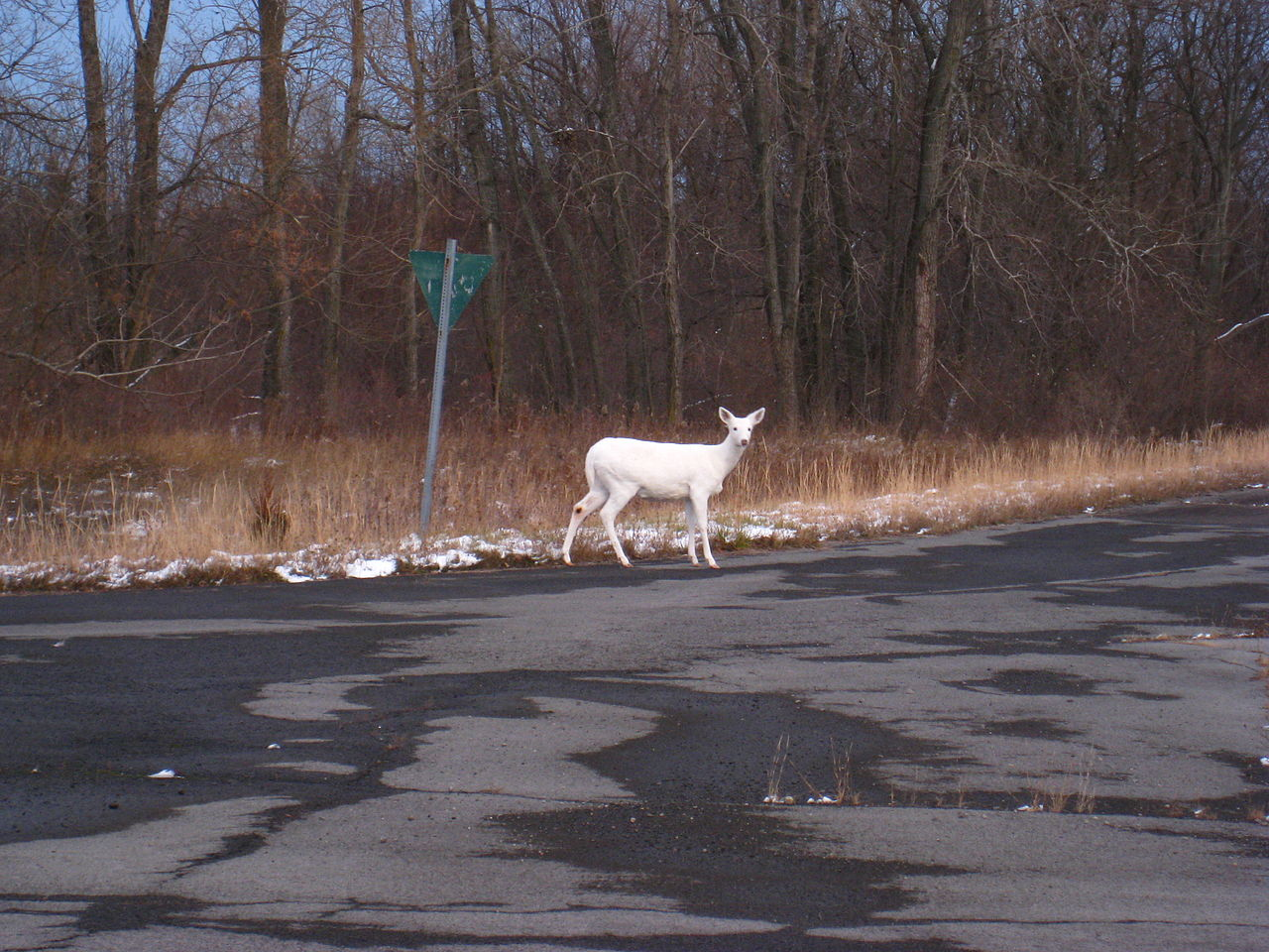 Seneca White Deer Offers Tours At Former Seneca Army Depot
