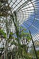 Serre des milieux arides-Jardin des plantes de Nantes (12).jpg
