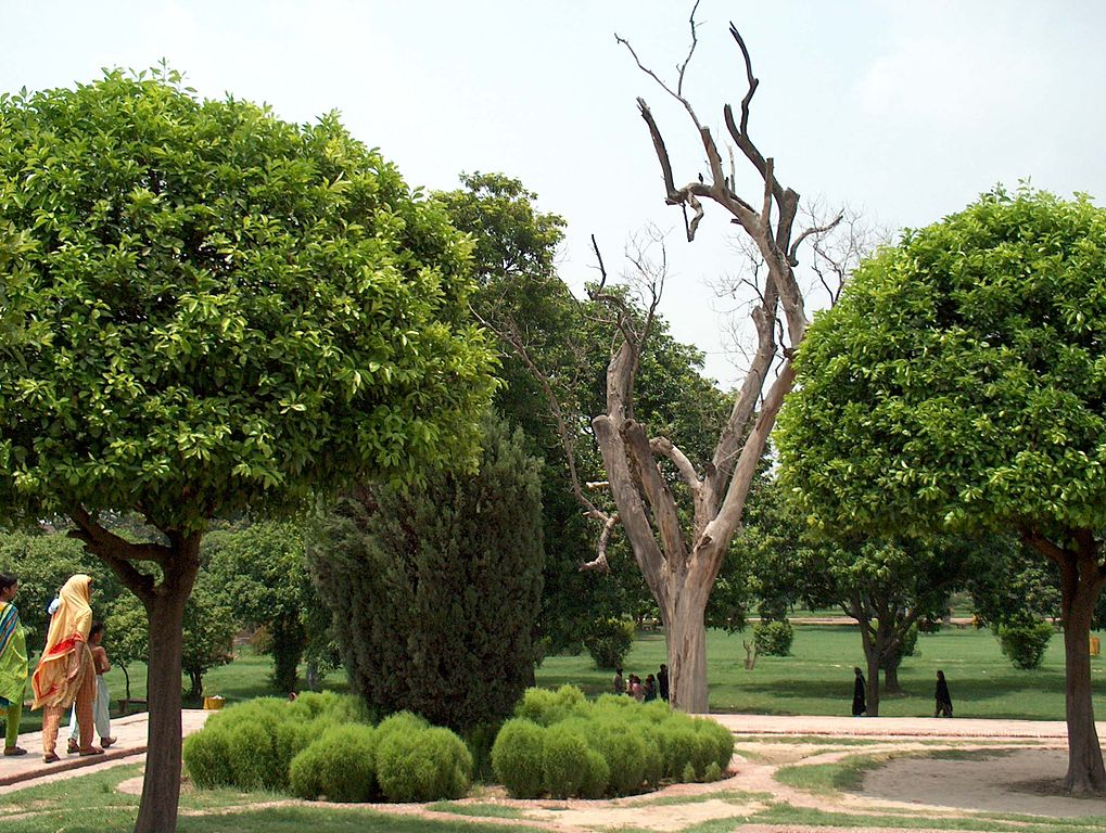 File shalamar garden july 14 2005 plants and trees on the second wikipedia - Alberi ornamentali per giardino ...