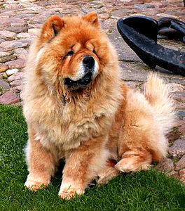 Image Result For Can Dogs Become
