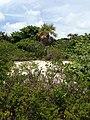 Silver Palm - panoramio (2).jpg