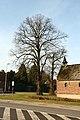 Sint-Catharinakapel met kapelbomen (opgaande linden) - 374784 - onroerenderfgoed.jpg