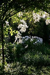 Photograph of white flowers in a garden. At the top, sprays of flowers hanging from branches are lit from behind. Beneath and behind those flowers are others that are in the shadows.
