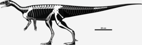 Skeletal reconstruction of Saturnalia tupiniquim.png