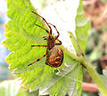 Small spider01.jpg