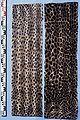 Spermophilus (Citellus) eversmanni fur skin.jpg