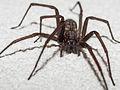 Spider B.jpg