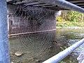 Spider Web (5808077497).jpg