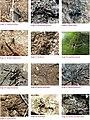 Spiders of Chinnar Wildlife Sanctuary 04.jpg