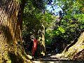 Spiritual Forest - panoramio.jpg
