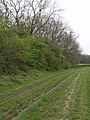 Spring Clump - geograph.org.uk - 1269188.jpg