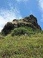 Starr-050419-6544-Opuntia ficus indica-habit-Mokolii-Oahu (24652762231).jpg