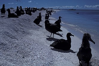 Tanager Expedition - Pearl and Hermes Atoll