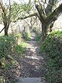 Steps leading down to the Allen Valley from Kenwyn cemetery - geograph.org.uk - 765801.jpg