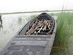 Still boat in Chars of Jamuna river at Bogra 18.jpg