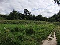 Stokes Field Grasses.jpg