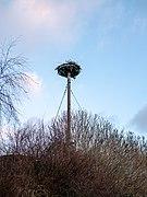 Storks nest, Ribnitz-Damgarten (P1070879).jpg