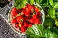 Strawberries (217212665).jpeg