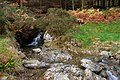 Stream, Omeath forest - geograph.org.uk - 617875.jpg