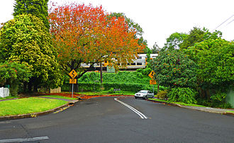 Lindfield, New South Wales - Strickland Avenue