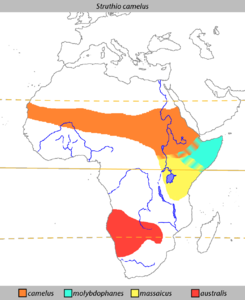 Struthio camelus Distribution.png