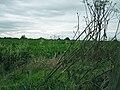 Sugar beet under autumn skies - geograph.org.uk - 544137.jpg