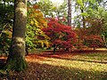Sunrays and Acers at Westonbirt - geograph.org.uk - 69594.jpg