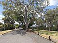 Suttlewood Court Mount Kynoch.jpg