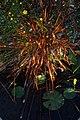 Swamp flower (5179307918).jpg