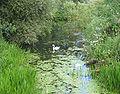 Swan at Waveney, Scole.jpg