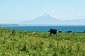 Taranaki Farm-5161.jpg