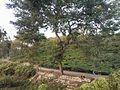 Tea Gardens in Sylhet (09).jpg