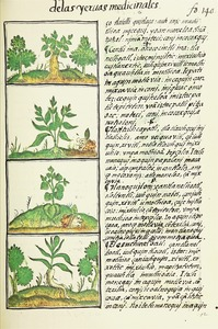 The Florentine Codex- Ethnobotanic Plants I.tif
