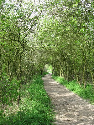 English: The Footpath from Wilstone Reservoir ...