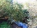 The River Ravensbourne (2) - geograph.org.uk - 1053364.jpg