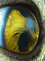 The Volcano's eye.jpg