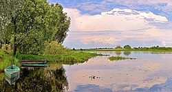 The bank of the river Iput at Dobrush Belarus 1.JPG