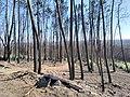 The fires in Pedrógão Grande.jpg