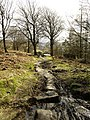 The footpath through Stanage Plantation - geograph.org.uk - 752702.jpg