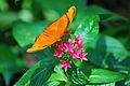 The julia butterfly.jpg