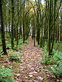 The way through the woods - geograph.org.uk - 1555670.jpg