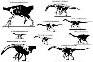 Therizinosaur - Skeletons to scale