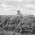 Tot landarbeider omgeschoolde diplomaat aan het werk in de wijngaard van de kibb, Bestanddeelnr 255-0652.jpg