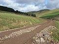 Track approaching Dundoran Plantation - geograph.org.uk - 353779.jpg